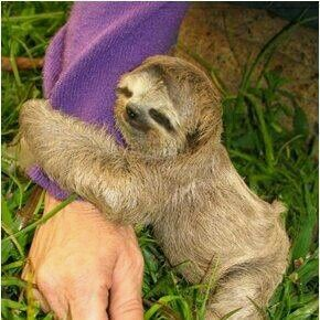 If only someone held me the way a baby sloth does