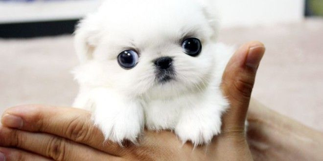 How to get cheap puppies for sale?