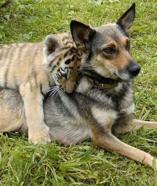 15 Interspecies Animal Hugs - Pets Tips & Advice | mom.me