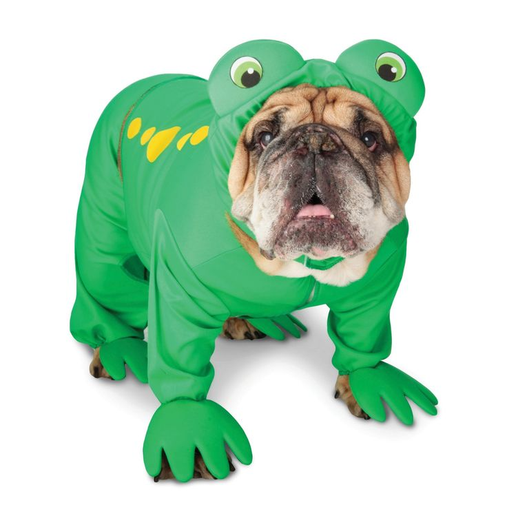 bulldog in a frog suit