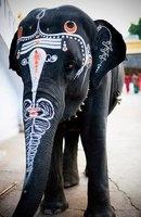 Painted #elephant