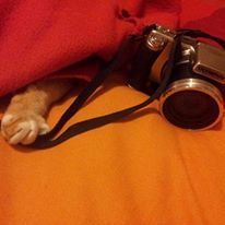 cat, trick or treat, photo, bed, love, shooting stolen, paw,