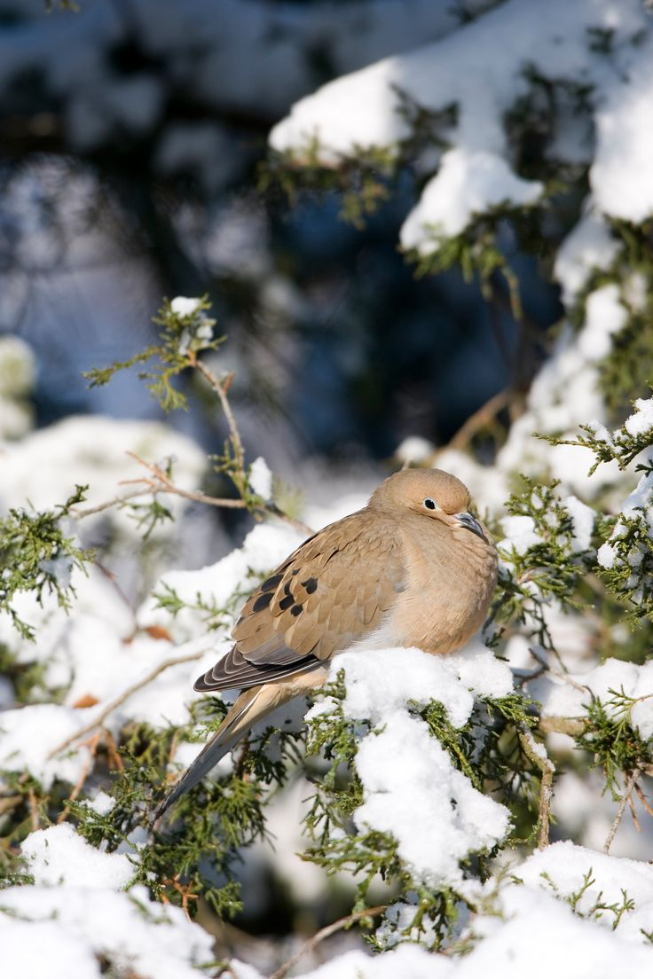 The Most Common Backyard Birds You'll See During the ...