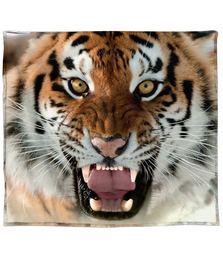 tigerungar