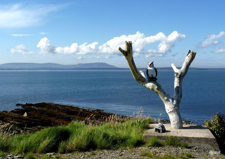 Tree In Orkney