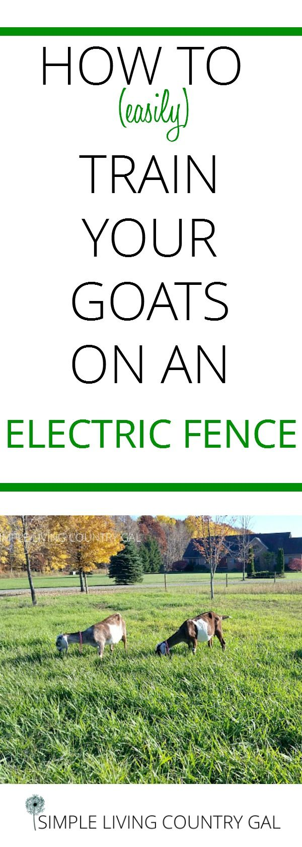 Train your goats on an electric fence simply by following these tips.
