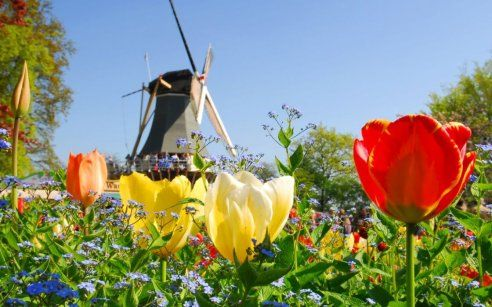 Visiting the Netherlands during Tulip Season - Holland.com