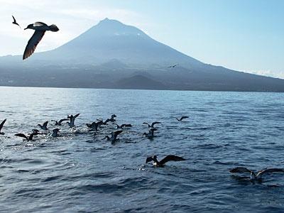 The Azores :) Pico Island