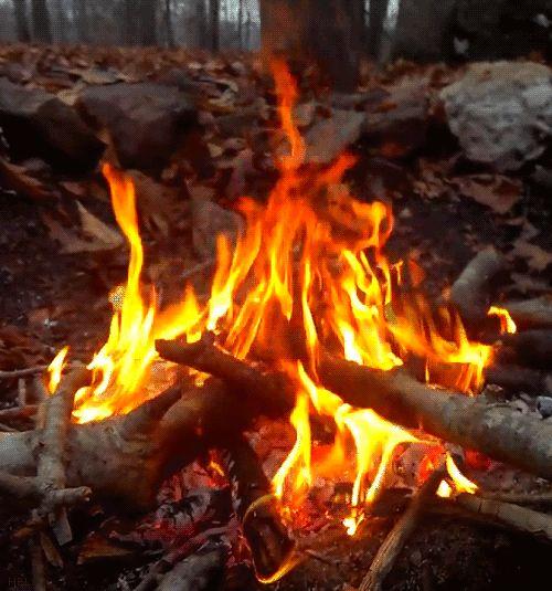 fogueira de acampamento na floresta: splendiferoushoney