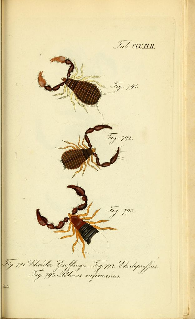 https://www.flickr.com/photos/biodivlibrary/8559409521/sizes/l