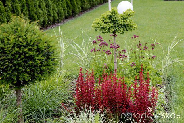 Ogród z lustrem - strona 348 - Forum ogrodnicze - Ogrodowisko
