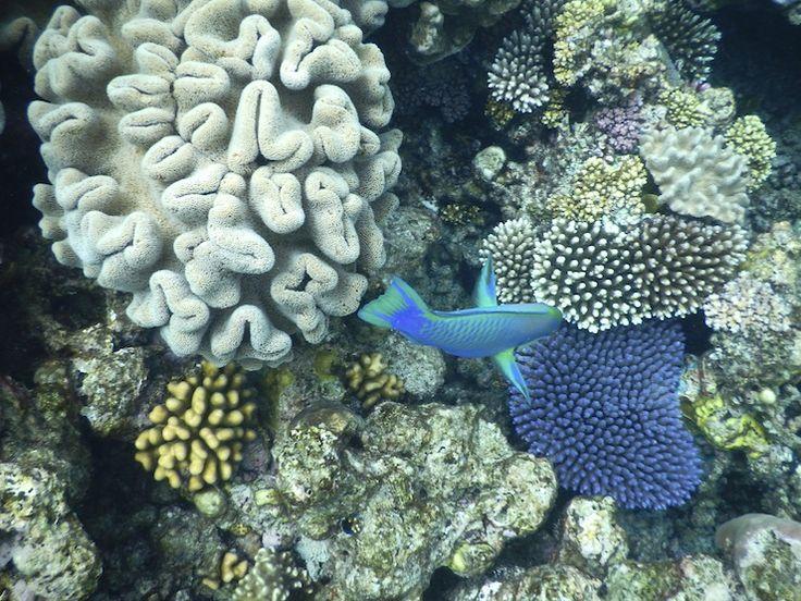 【世界の絶景】世界最大の珊瑚礁、グレート・バリア・リーフへ行ってみた | GOTRIP! 明日、旅に行きたくなるメディア