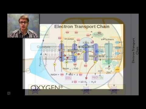 Cellular Respiration by Bozeman Science.  This video is a little more like a traditional classroom lecture, but with helpful explanations and diagrams throughout. #cellularrespiration #sciencevideos