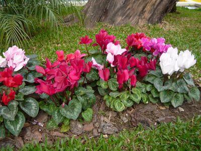17 mejores im genes sobre plantas de invierno en pinterest for Ver imagenes de jardines de invierno