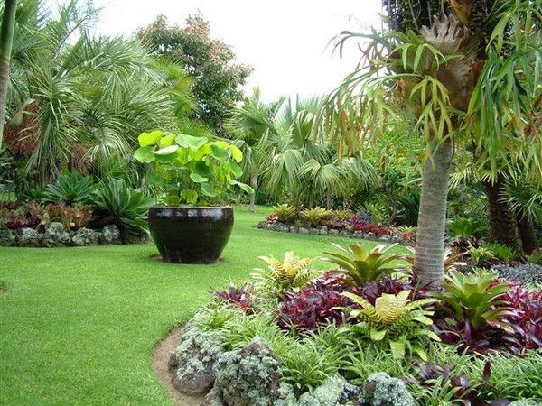 large vessel with lotus totara waters subtropical garden