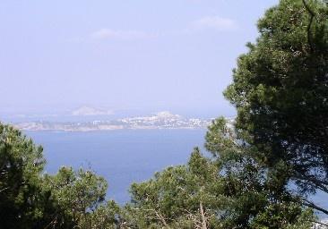 Escursione al Bosco della Maddalena - Casamicciola Terme, Isola d'Ischia.  Il Bosco della Maddalena è situato a ca. un chilometro dal centro del Comune di Casamicciola Terme ai confini del Comune di Barano ed Ischia.