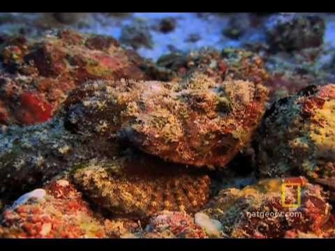 Exploring Oceans: Great Barrier Reef Nat Geo video on YouTube