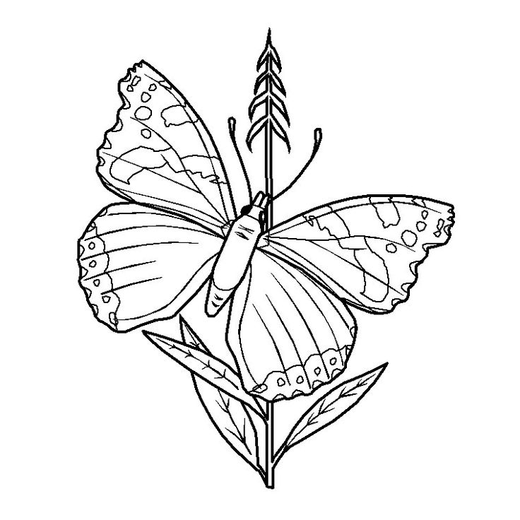 httpwwwcoloriagesfrcoloriage papillon belle