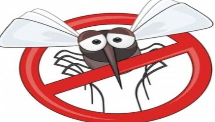Κουνούπια τέλος! Το ακαταμάχητο μυστικό για να μην σας ξανά τσιμπήσουν.