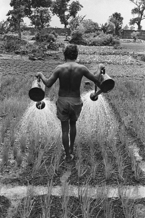 John Vink  01/1973: Ethnic tamoul watering onion field