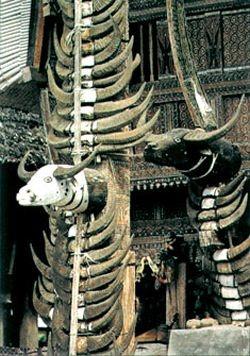 Buffalo horns on Toraja houses