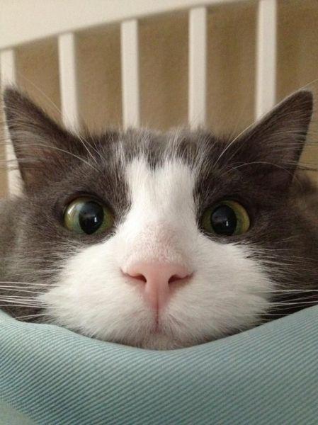 ( ͒ ु•̀ .̫ •́ ू ͒)  #neko #cat