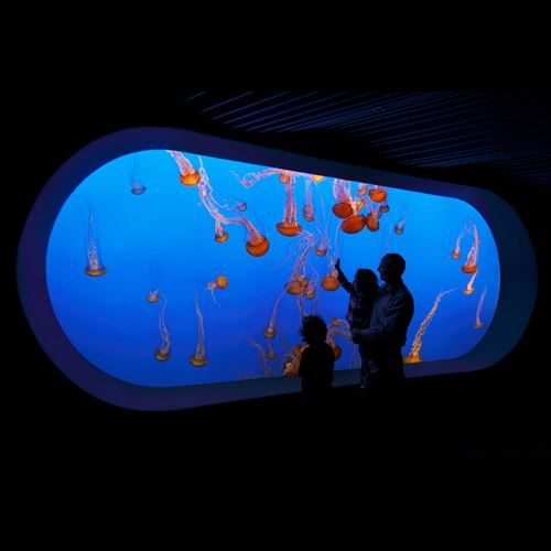 Hours and Ticket Information for Visiting the Monterey Bay Aquarium - Official Site