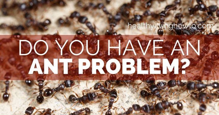 Ants. First you spot one, then another and another. Before you know it, there is a whole mess of them. We all have ant problems from time to time. This is true for both insects and our thoughts. I ...