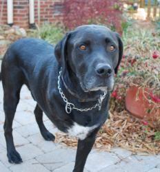 Adopted Dog Needs To Lighten Up