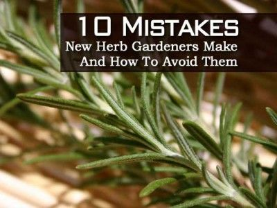10 Mistakes New Herb Gardeners Make And How To Avoid Them