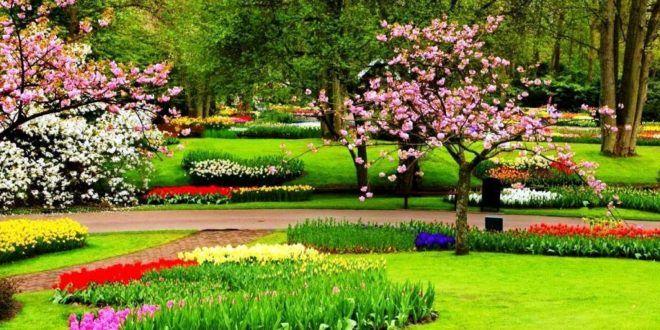 Contoh Gambar Pemandangan Taman Bunga Contoh Sip