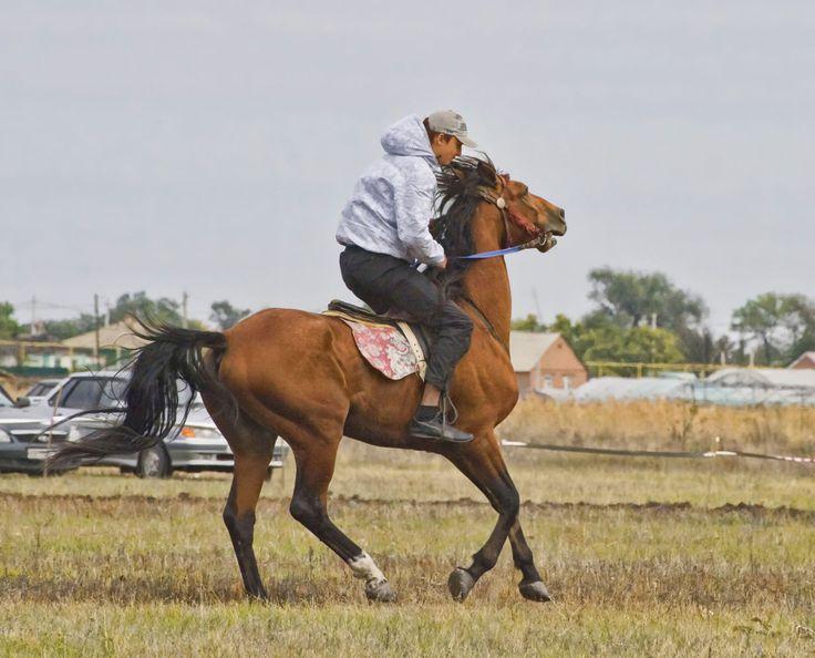 на сильном коне