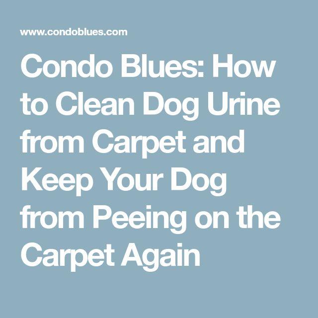 Best 25 Cleaning Dog Pee Ideas On Pinterest Dog Pee