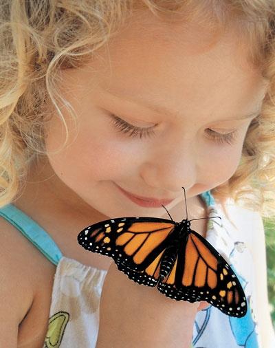 Backyard Photo Contest | Birds & Blooms | Butterflies & Moths | Pinte...
