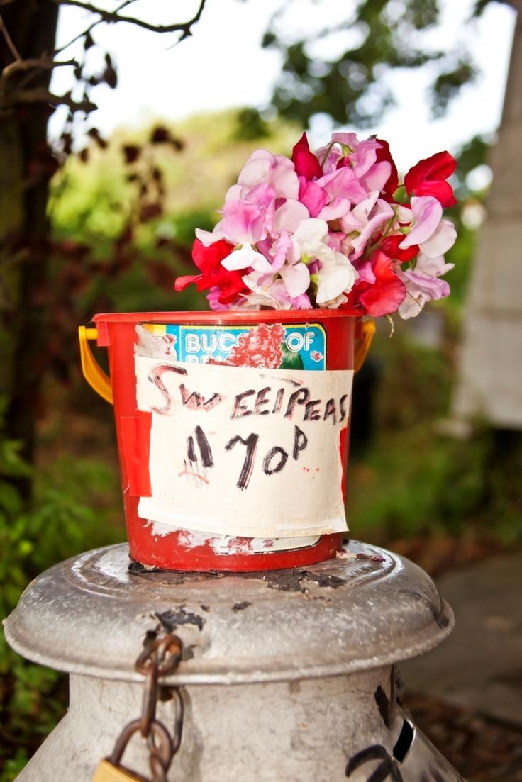 12 best images about honesty box on pinterest gardens for Garden design jersey channel islands