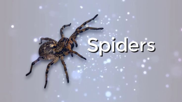 Dream about spiders |  | Dreams Meaning and Interpretation