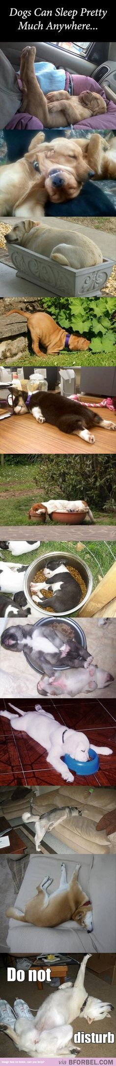 Dogs - they can sleep anywhere ...