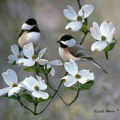 Todos merecemos ser libres.... jamás enjaulados!!!