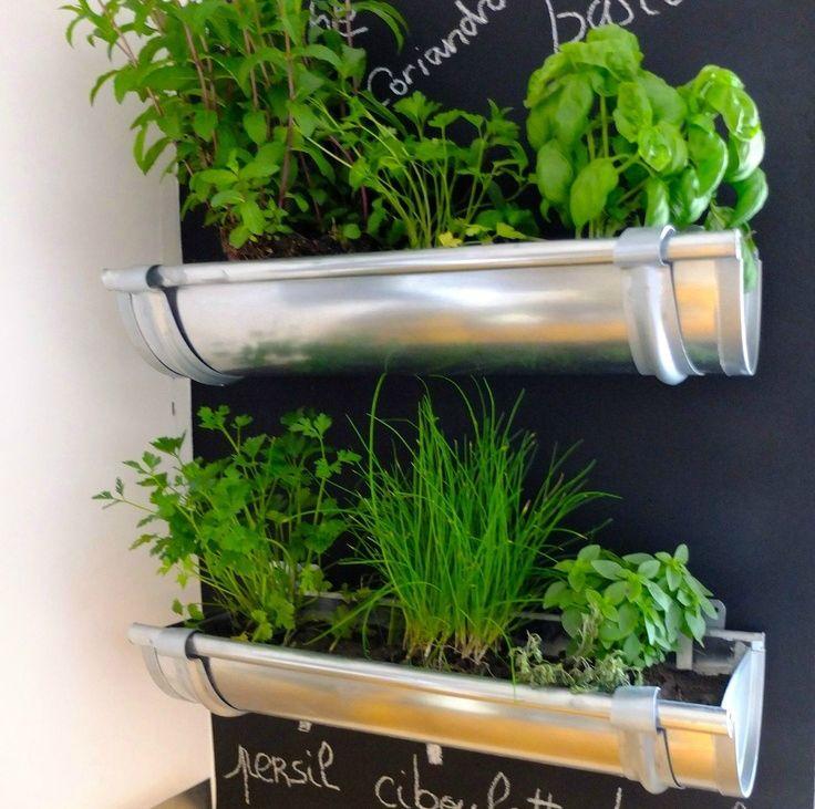 plante aromatice de interior1