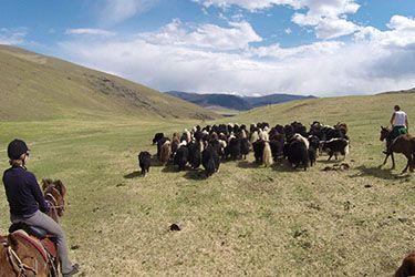 Pour revivre les émotions de Rendez-Vous en Terre Inconnue - Transhumance en Mongolie... http://www.rando-cheval-mongolie.com/voyages/randonnees-cheval/mongolie-transhumance-nomade.html