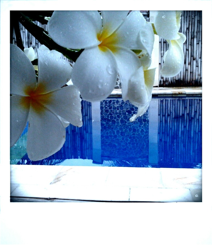After a tropical shower the flowers and the pool look even better-Diversia Diving Gili Trawangan Lombok Indonesia