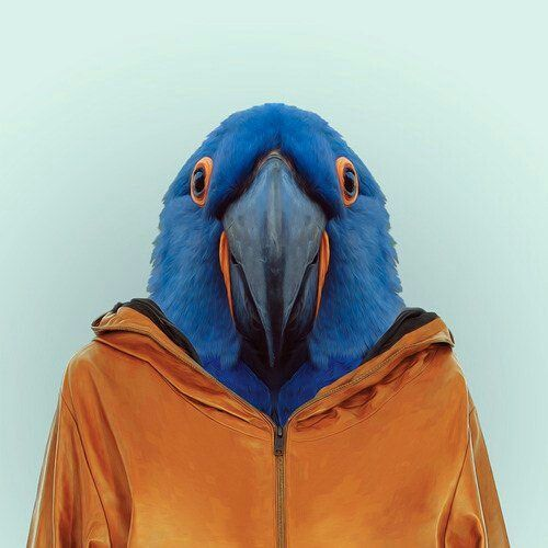 Parrot #orange #hoodie #animal #as #human #design #parrot