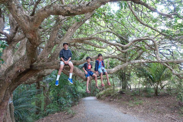 Big tree at Whangarei falls