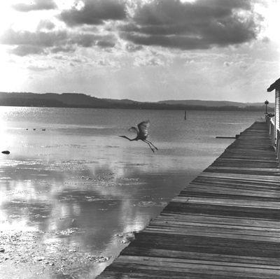 Max Dupain Exhibition Photography: black & white photography, iconic Australian photographer, exhibition archive, landscapes, nudes, still life and Sydney. Souvenir of the Entrance,1976