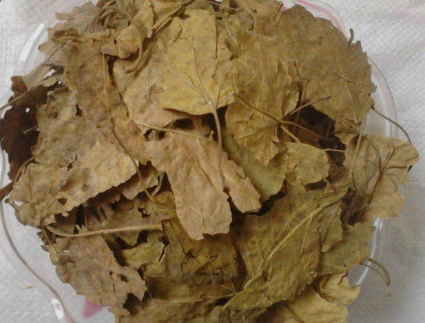 Sang Ye, Mulberry leaf Expels wind, clears lung heat - wind-heat with fever, headache, sore throat; also for lung dryness causing dry mouth, dry cough, lung heat with thick and yellow sputum. Cools liver and clears the eyes - liver channel eye problems due to wind-heat or yin deficiency, red, sore, dry or painful eyes, floaters. Cools the blood and stops bleeding - mild cases of vomiting blood due to heat in the blood.