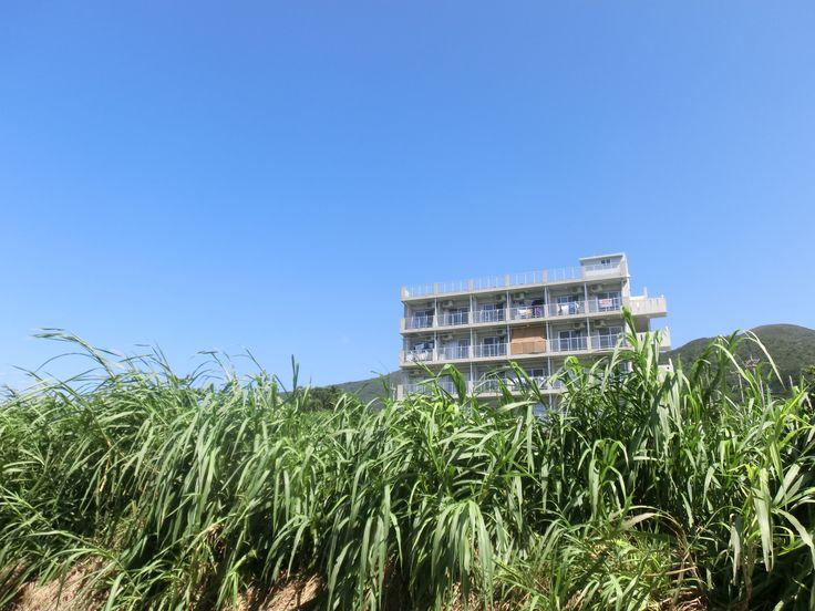 sugarcane and concrete