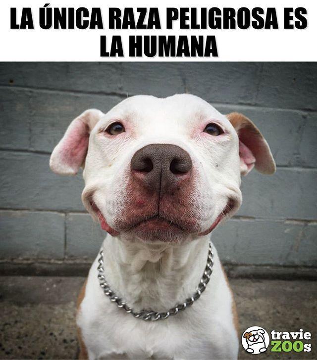 No Podriamos Estar Mas De Acuerdo Dogs Perros Peligro Danger Humanos Cute Funny Animals Animals Cute Animals