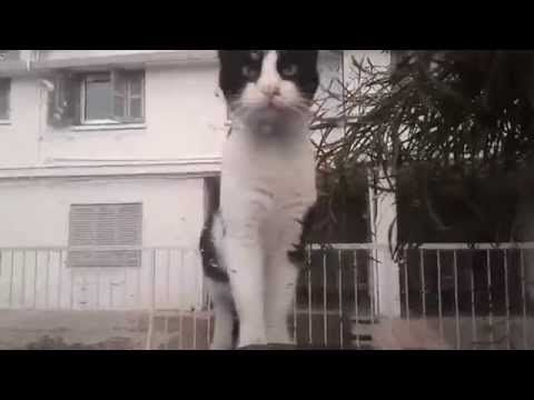 Thug Life: Funny Cat Compilation 2015 (NEW)