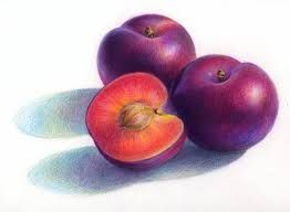 pencil color drawing still life - Google Search