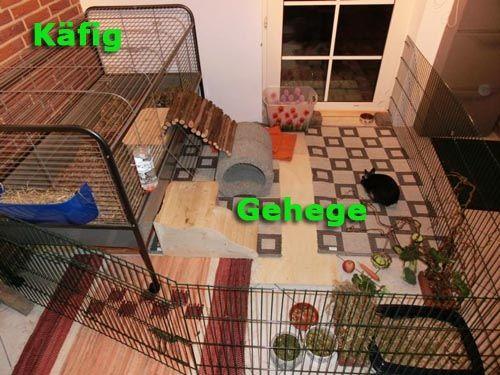 353 besten kaninchenhaltung bilder auf pinterest. Black Bedroom Furniture Sets. Home Design Ideas